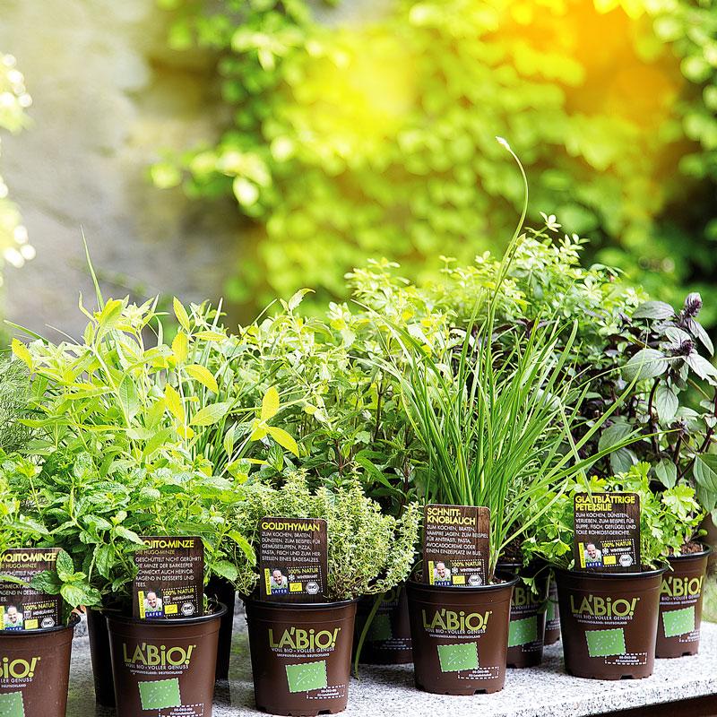 Bio Kräuter und Gemüsepflanzen findet ihr im Sortiment vom Gartencenter Pötschke in Schwerte.