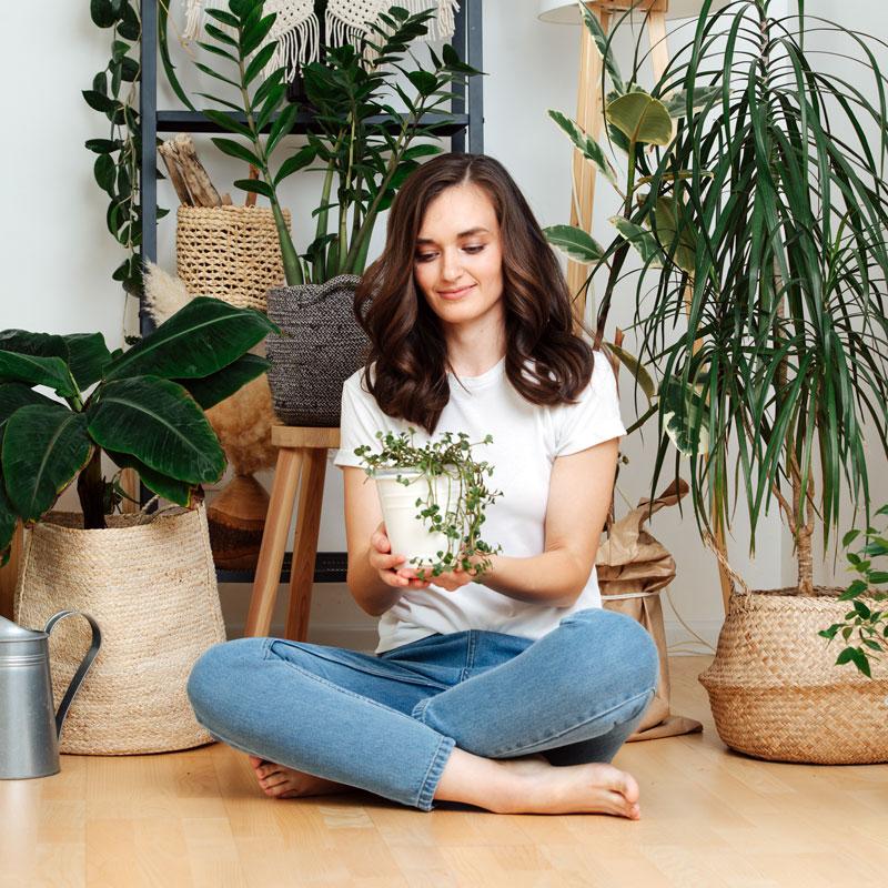Zimmerpflanzen-Gartencenter-Poetschke-Schwerte