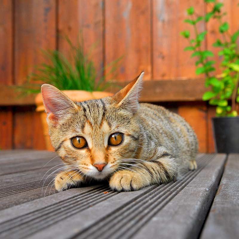Terrasse mit Katze
