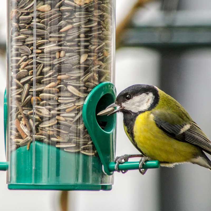Vogelfutter für Vögel