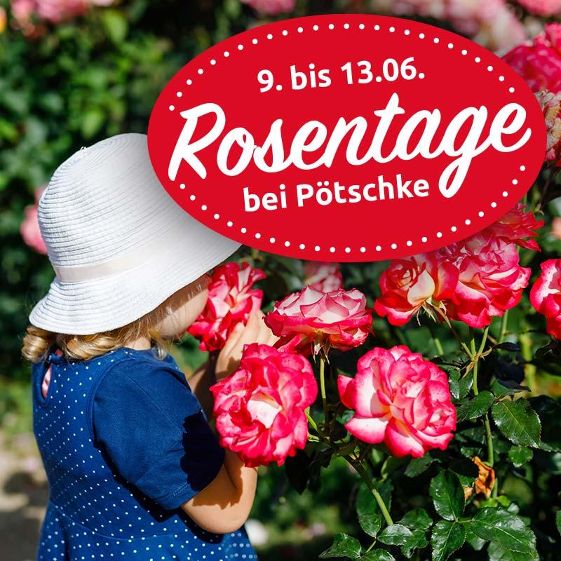 Gartencenter Potschke Weil Pflanzen Freude Bringen